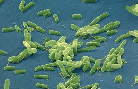 Vi khuẩn tồn tại trong nước