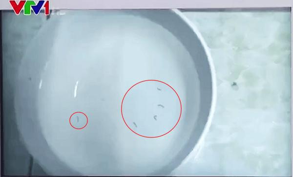 NINH BÌNH: Người dân hoang mang vì nước máy có giun
