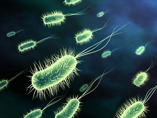 Nước nhiễm khuẩn E.coli