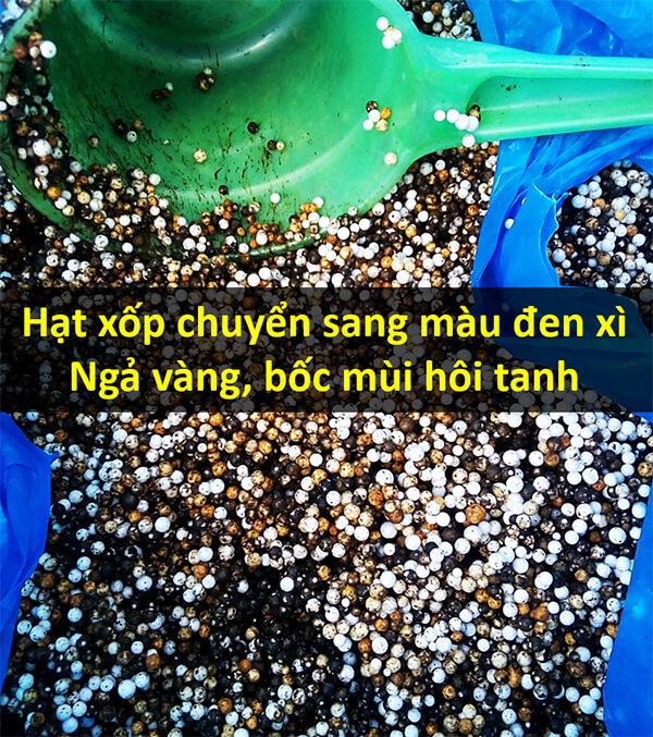 Hạt xốp trong bể lọc cũ chuyển màu đen xì, bốc mùi hôi