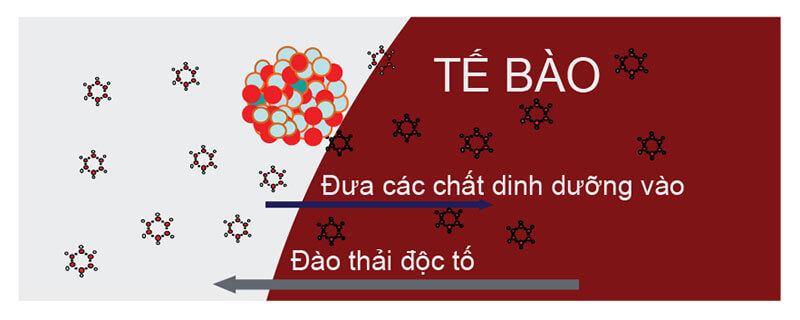 nuoc-ion-kiem-de-dang-tham-thau-vao-te-bao