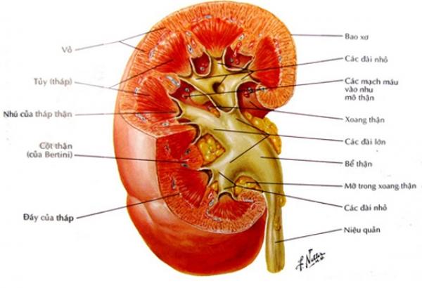 Nguyên nhân gây bệnh thận và tác dụng của ion kiềm đối với bệnh thận