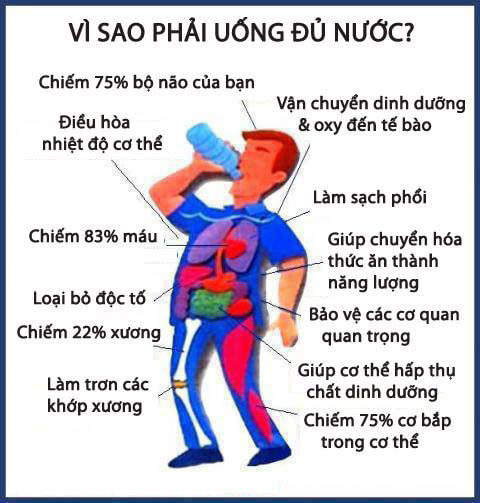 vai-tro-cua-nuoc-voi-co-the