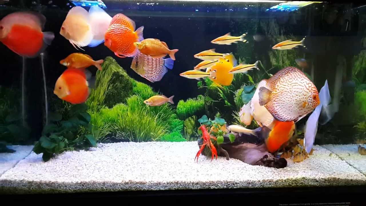 Những điều cần biết về độ Ph của nước nuôi cá cảnh