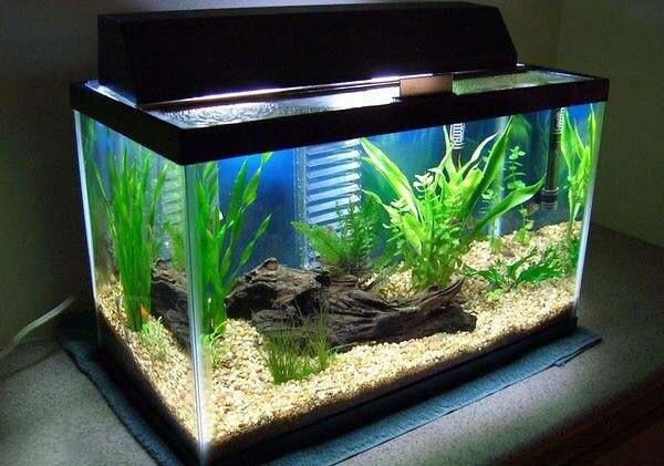 Cách giảm Ph trong bể cá cảnh